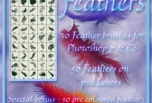 25组免费的羽毛Photoshop笔刷下载