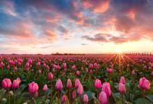 49张漂亮的花朵摄影照片