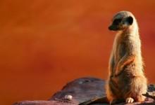 50张惊人的动物摄影照片