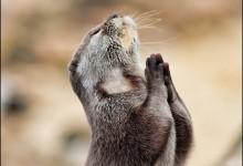 57张优秀的野生动物摄影照片