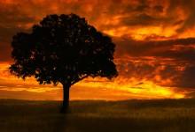 20张宁静美丽的林木摄影照片