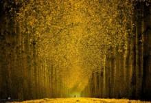 65张漂亮的树木摄影照片