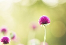 40张最新的鲜花摄影照片