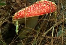30张可爱的蘑菇摄影照片