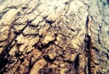 40个高品质的木头纹理背景下载