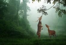 25张漂亮的野生动物摄影照片