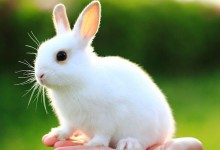 30张可爱的小动物摄影照片