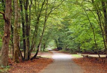 33张森林自然保护区的摄影照片