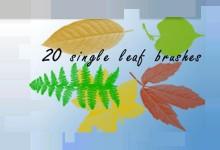 19组免费的Photoshop树叶笔刷包下载