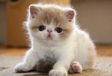 50张可爱的动物宝宝摄影照片
