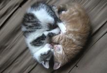 40张超级可爱的小猫摄影照片