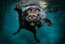 33张狗狗在水下的摄影照片