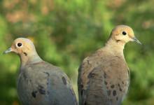 25张以鸽子为主题的摄影照片