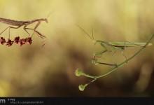 30张优秀的昆虫微距摄影照片