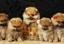 30张超级可爱的小狗摄影照片