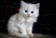 30张优秀的可爱动物摄影照片