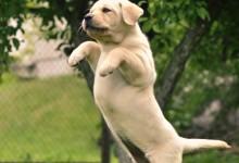 25张可爱搞笑的狗狗摄影照片