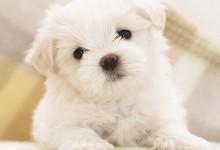 33张可爱的小狗摄影照片