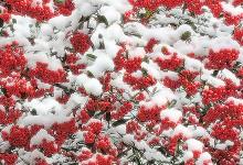 18张寒冷的冬季摄影照片欣赏
