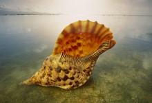 25张以贝壳为主题的摄影照片