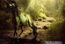 35张以马为主题的艺术作品欣赏