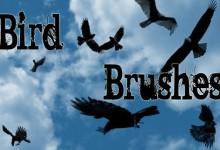 25组以鸟为主题的免费笔刷集下载