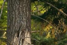 20张惊人的动物伪装摄影照片