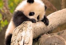 20张非常可爱的小动物摄影照片
