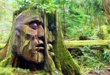 40个创意的树雕艺术作品