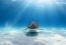 25张惊艳的水下摄影照片