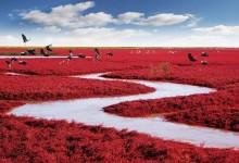 10张漂亮迷人的盘锦红海滩摄影照片