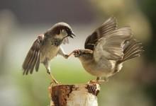 45张漂亮的鸟类摄影照片欣赏