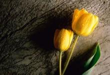 40张漂亮美丽的花朵桌面壁纸下载