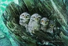 16张优秀的鸟类摄影照片欣赏