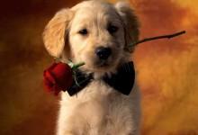 50张超级可爱的狗狗摄影照片