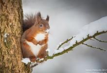 19张冬天的动物摄影照片欣赏