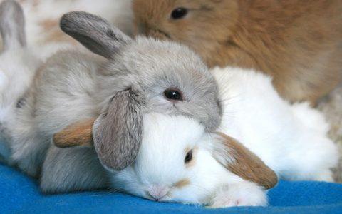 31张可爱的动物互相枕头照片