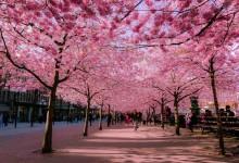 20张漂亮的花朵摄影照片