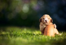 50张可爱的狗狗摄影照片