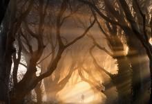 12张树林隧道风景摄影照片