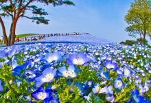 """10张日本海滨公园""""蓝色海洋""""的摄影照片"""