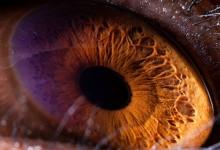 29张神奇的动物眼睛微距摄影照片