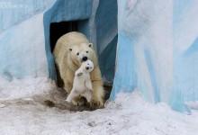 25张动物妈妈们的温情瞬间照片