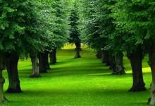 20张世界上漂亮的树木摄影照片