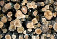 20个免费的木头背景纹理素材资源下载