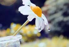 29张吸人眼球的花朵摄影照片