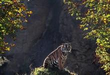 22张雄壮的野生动物摄影照片欣赏
