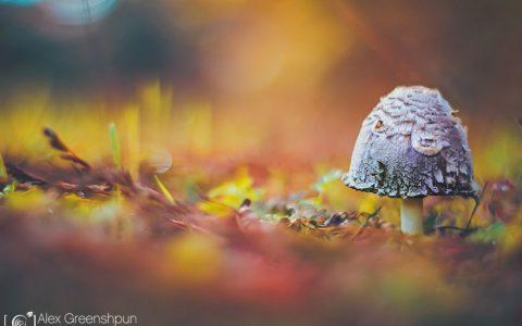30张优美的秋天落叶摄影照片欣赏