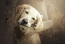 20张狗狗的温馨摄影照片欣赏