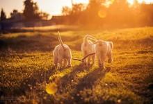 31张顽皮可爱的狗狗摄影照片